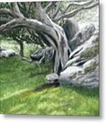 Irish Tree Ring Of Kerry Metal Print