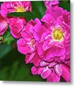 Irresistible Rose - Paint Metal Print