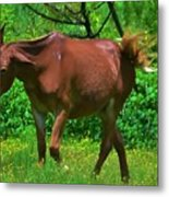 Irritated Horse Metal Print
