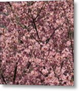 First Spring Blossom Metal Print