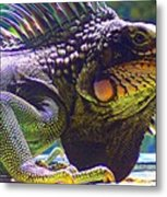 Island Iguana Metal Print