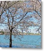 It Must Be Spring In Washington Metal Print
