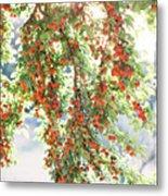 Italian Plum Tree Metal Print