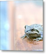 It's A Good Day To Be A Frog Metal Print