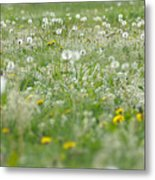 It's Dandelion Time Metal Print