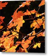 It's Fall Metal Print