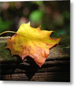 Its Fall Metal Print