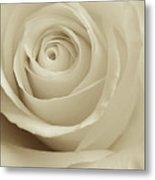Ivory Rose Metal Print