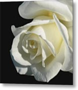 Ivory Rose Flower On Black Metal Print