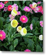 Ivory Tulips And Salmon Daisys Metal Print