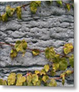 Ivy And Ancient Wall In Old Montreal Hd Photography Metal Print