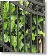 Ivy And Gate Metal Print
