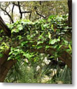 Ivy-covered Arch At The Alamo Metal Print