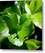 Ivy In Sunlight Metal Print