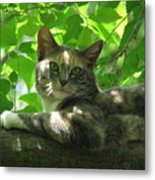 Ivy In The Tree Metal Print