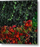 Ivy Over Metal Print