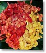 Ixora Flower Mix Metal Print