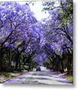 Jacarandas In Pretoria Metal Print