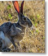 Jack Rabbit Metal Print