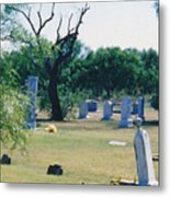 Jack Rabbit In Cementery Metal Print