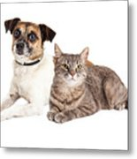Jack Russell Terrier Dog And Tabby Cat Metal Print