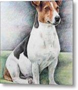 Jack Russell Terrier Metal Print