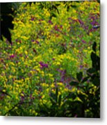 Jackson County Wildflowers Metal Print