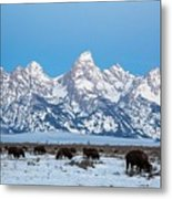 Jackson Hole The Grand Tetons Metal Print