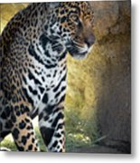 Jaguar At Rest Metal Print
