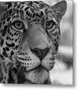 Jaguar In Black And White Metal Print