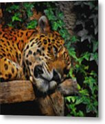 Jaguar Relaxing Metal Print