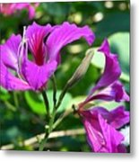 Jamaican Bloom Photograph   Metal Print