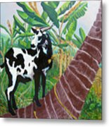 Jamaican Goat In A Tree Metal Print