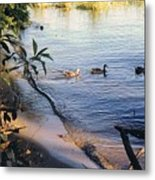 James River Ducks In A Row Metal Print