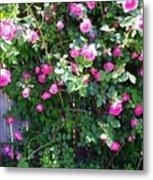 Jane's Rose Bush Metal Print