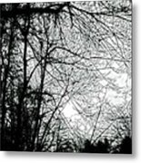 January Beauty 2 Black And White  Metal Print