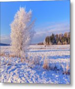 January Day Metal Print