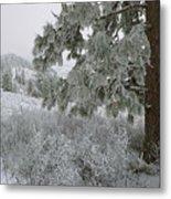 January On Kamiak Butte Metal Print