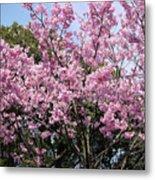 Japan Blossoms Metal Print