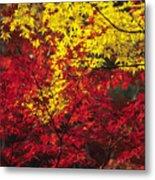 Japan Vibrant Leaves Metal Print