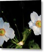 Japanese Anemone Flower Metal Print