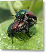 Japanese Beetles Mating Metal Print
