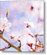 Japanese Cherry - Sakura In Bloom Metal Print