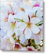Japanese Cherry Tree Blossoms 2 Metal Print