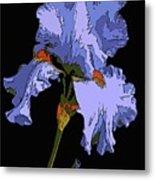 Japanese Iris-blue Beauty Metal Print