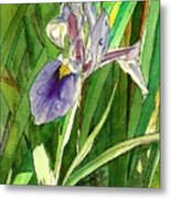 Japanese Iris Metal Print