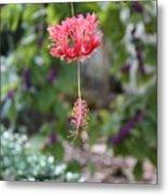 Japanese Lantern Hibiscus Metal Print