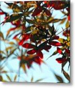 Japanese Maple 1592 Metal Print