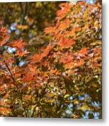 Japanese Maple Beauty Metal Print