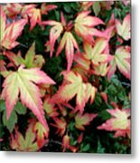 Japanese Maple Metal Print by Cynthia Adams